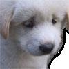 :dogsad: